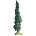 S05 Small Fir Tree