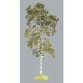 S09 Birch Tree