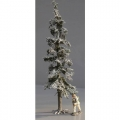 S05b Tall Winter Fir Tree